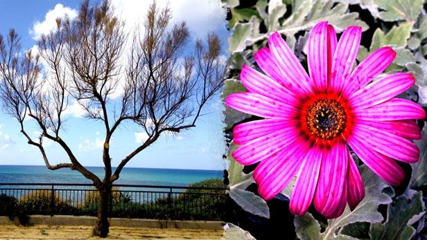 صور تظهر سحر الطبيعة وجمالها